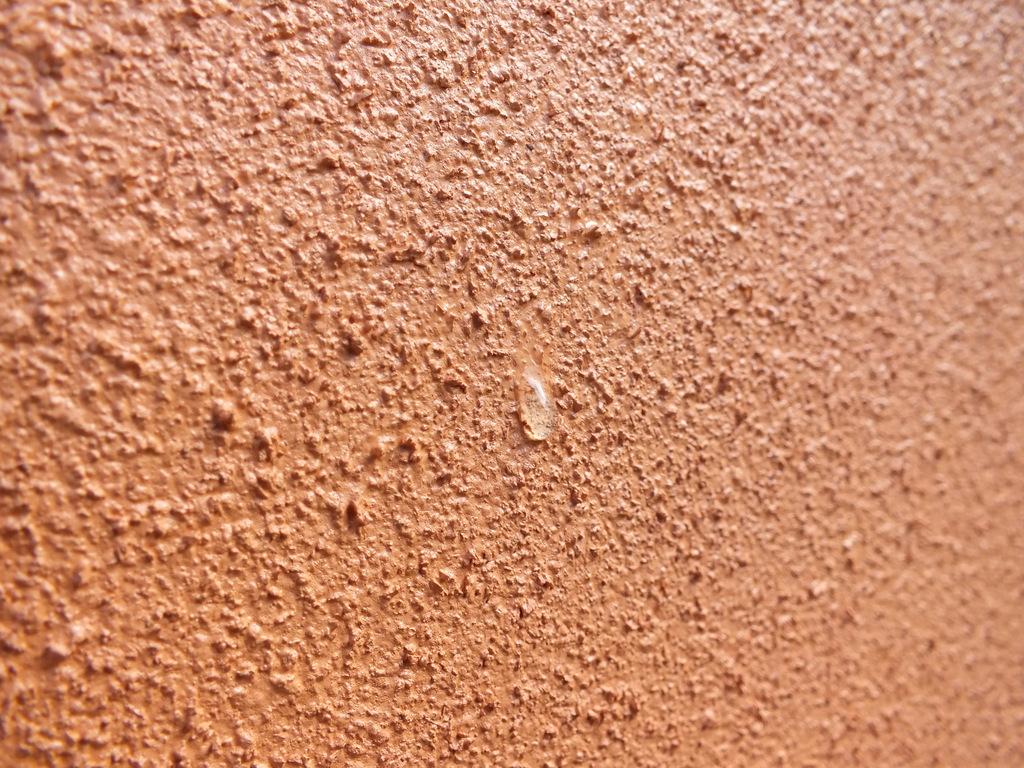 'Diathonite' Insulating Render